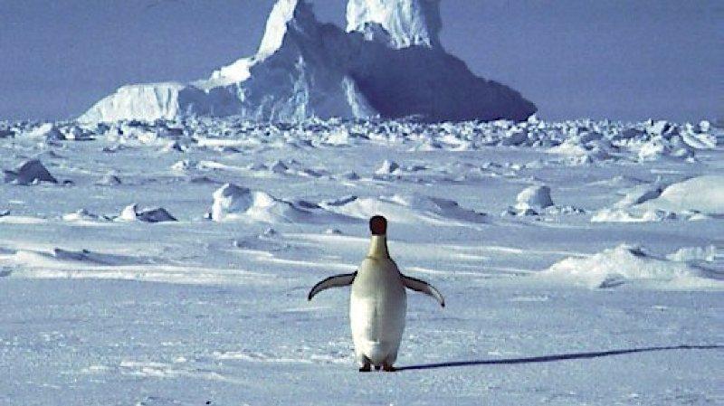 Réchauffement climatique: l'Antarctique a enregistré une température record de plus de 20°C