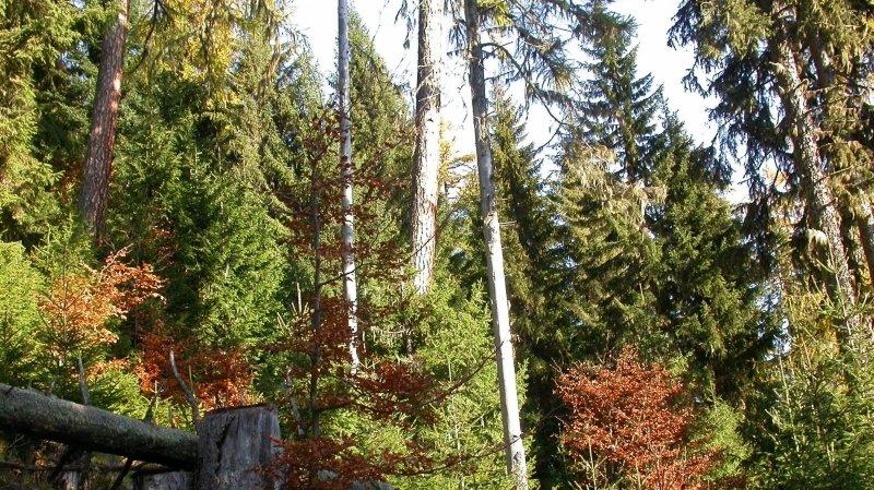 L'évolution de la forêt valaisanne – ici le secteur de l'Arpille au-dessus de Martigny – sera évoquée lors d'une conférence le 24 février.