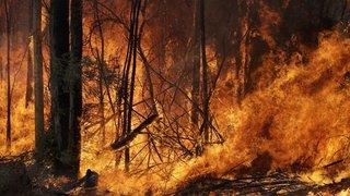 Après plus de trois mois d'incendies, l'Australie soulagée par la pluie
