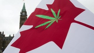 La chute du business du cannabis au Canada