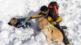 Anzère, entraînements de chiens d'avalanches