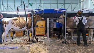 Swiss Expo: la foire agricole réussit sa première édition à Palexpo