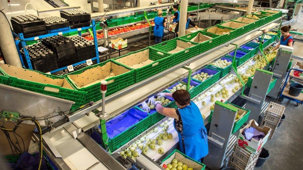 En quelques années, Fenaco a investi plus de 20millions de francs dans la centrale La Montagne Union Fruits SA à Charrat.