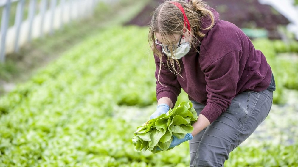 L'agriculture valaisanne vit dans la crainte de manquer de bras en raison de la crise du coronavirus.