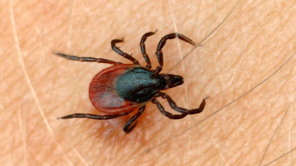 La tique peut transmettre deux maladies: l'encéphalite et la maladie de Lyme. Il n'existe de vaccin que pour la première.