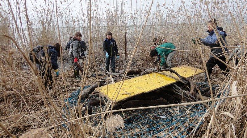 Le nettoyage annuel permet d'évacuer les bois et les déchets des roselières.