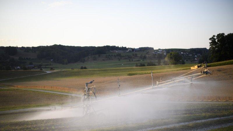 Agriculture: les paysans ne devraient pas profiter d'allègements fiscaux en cas de mauvais temps