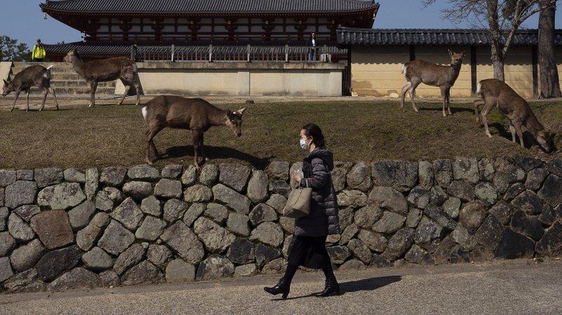 A Nara, au Japon, les animaux ont quitté leur parc pour s'ébattre en ville.
