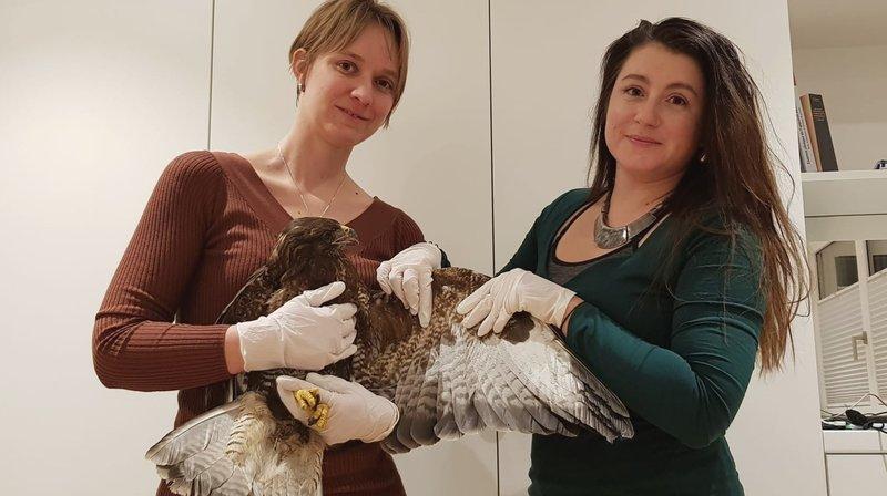 L'unique centre de soins pour oiseaux du Valais va rouvrir ses portes aux Marécottes