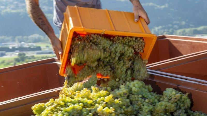 Valais: une bourse de la vendange pour aider les vignerons