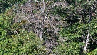 Adapter les forêts au climat, un défi