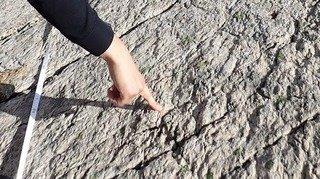 Une piste de proto-dinosaures découverte en Valais