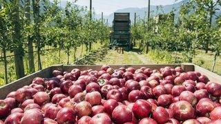 Valais: fruits et légumes à la conquête des 4-25 ans