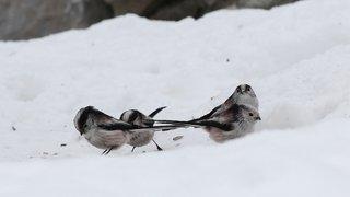 Nos petits oiseaux souffrent-ils de ce retour du froid?