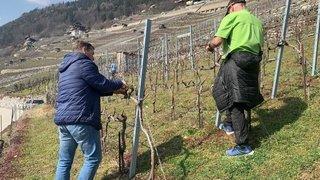 Le Valais met les bouchées doubles pour aider son agriculture à affronter la crise du coronavirus