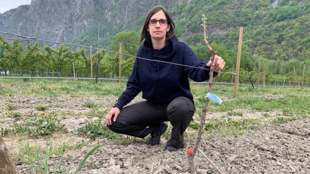 Anne Constantin pose avec un plant d'abricotier marqué de rouge et oublié par les voleurs.