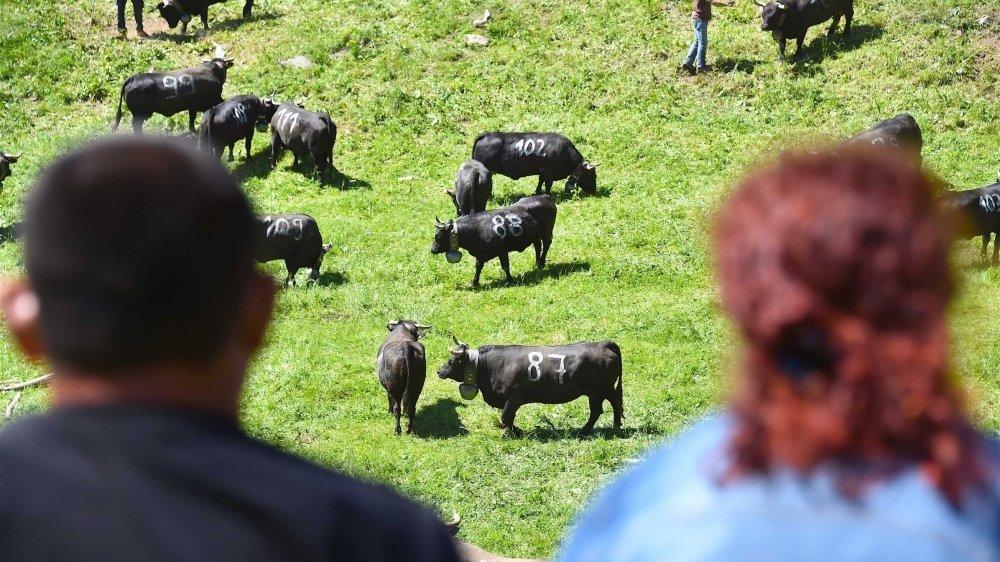 A l'image de celle de l'Alpage d'Odonne u-dessus d'Ovronnaz photographiée l'an passé, toutes les inalpesse vivront en tout petit comité cette année. La faute au coronavirus