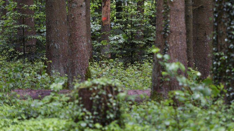 Confusion entre colchique et ail des ours: intoxication mortelle