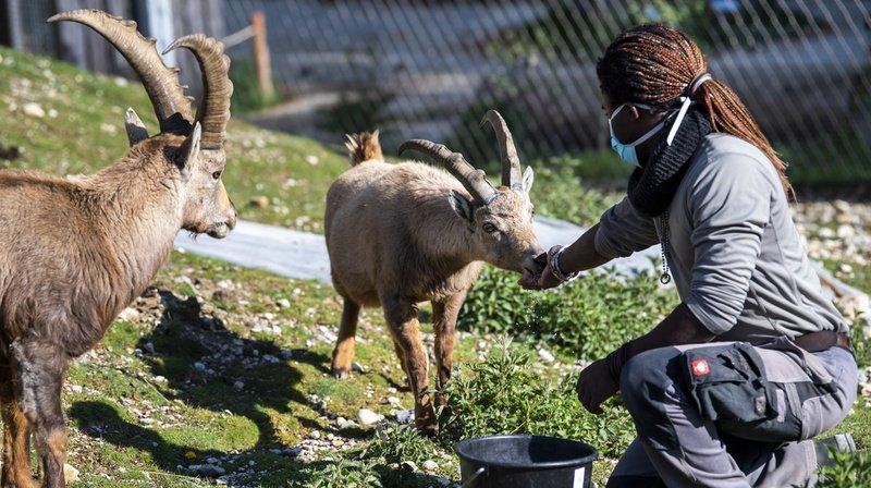 Coronavirus: gros soucis financiers pour les parcs animaliers romands