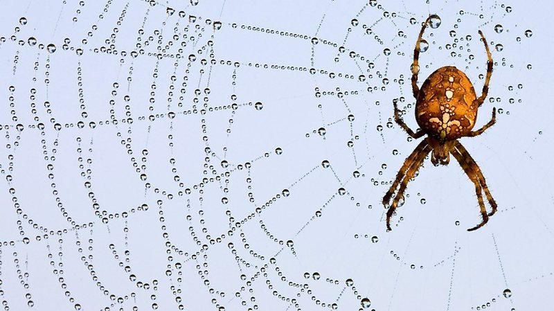 Avec le recul des insectes, les araignées disparaissent aussi