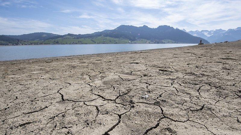 Sécheresse: les paysans et producteurs de céréales espèrent la pluie