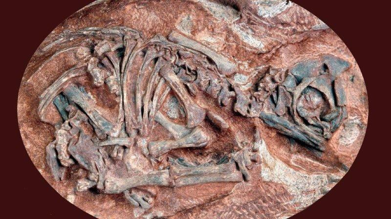 Des oeufs de dinosaures passés aux rayons X