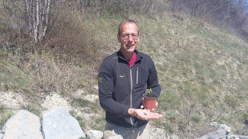 Coronavirus: le Parc naturel Pfyn-Finges envoie des centaines de kits de jardinage aux écoles