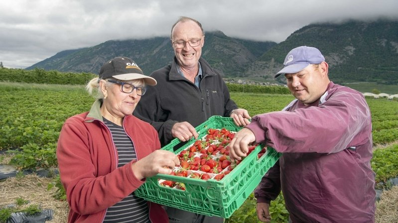 Ces saisonniers qui ont fait dix-huit heures de route pour venir récolter nos fraises malgré le coronavirus