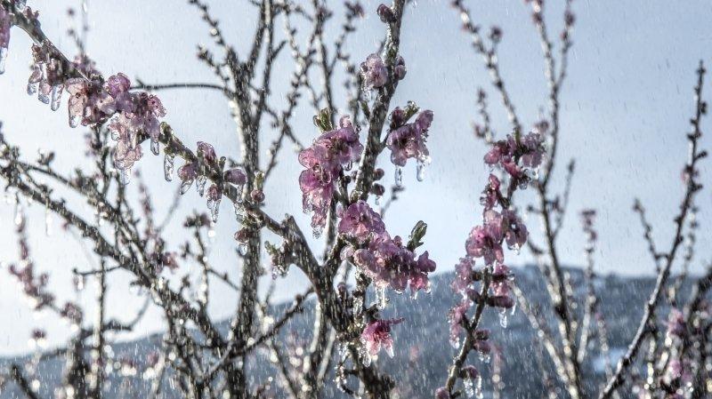 Bas-Valais: du matériel de lutte contre le gel a été volé dans les vergers