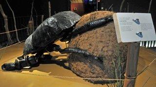 Montorge: une exposition sur les excréments pour mieux comprendre le monde animal