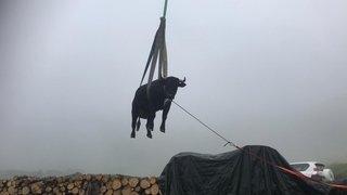 Une vache tirée d'un torrent à Bagnes