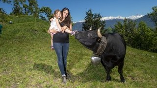 Coronavirus: sans finale à Aproz, les mamans passionnées de race d'Hérens seront les reines de ce dimanche