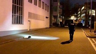 Un castor  perdu mobilise  la police