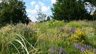 Le jardin naturel. Par Alex Schofield