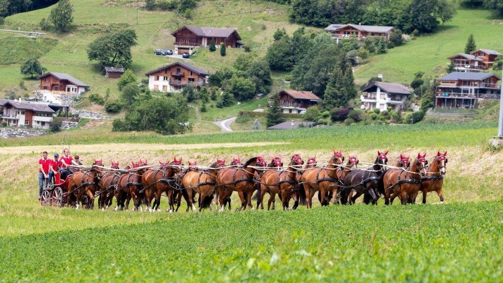 Jérôme Voutaz et ses vingt chevaux, un attelage bien plus long qu'un poids lourd.