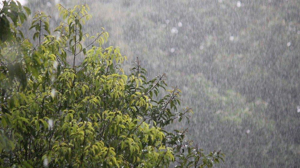 Il a plu à la Saint-Médard. Saint Barnabé lui coupera-t-il le nez?