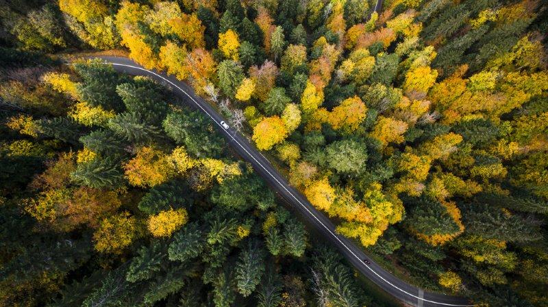 Environnement: nouvelles stratégies en vue pour la gestion des forêts