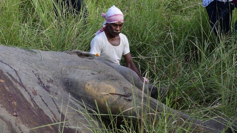 Le corps de l'éléphante a été tiré hors de la rivière. (Illustration)