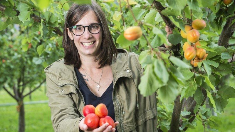 Délicate, la culture d'abricots bios arrive timidement en Valais