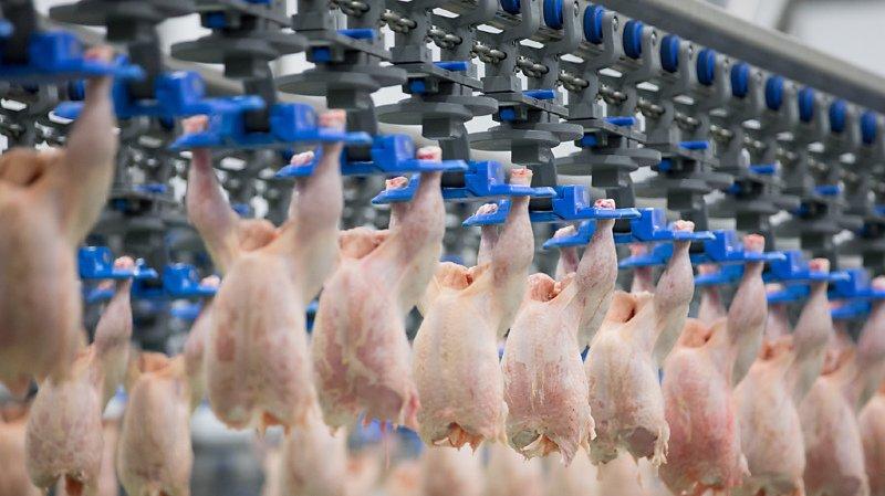 Le Conseil des Etats ne veut pas mettre les abattoirs sous vidéosurveillance (photo symbolique).