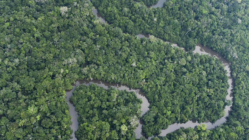 Climat: les forêts tropicales pourraient relâcher du carbone