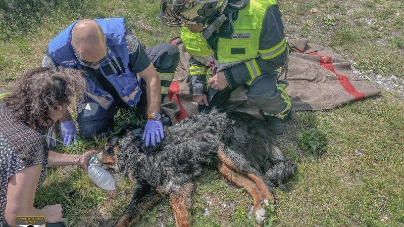 Réchy: les pompiers de Sierre sauvent le chien Spyke d'un incendie