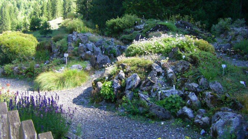 Découvrir la flore locale en se promenant dans les jardins alpins