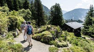Plus de 4000 espèces de plantes à découvrir au jardin alpin de Champex-Lac