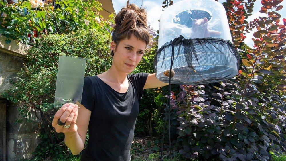 Camille Pitteloud, biologiste à l'Etat du Valais participe à la lutte contre le moustique tigre. Elle pose des pièges, effectue des traitements et des prélèvements pour analyses .