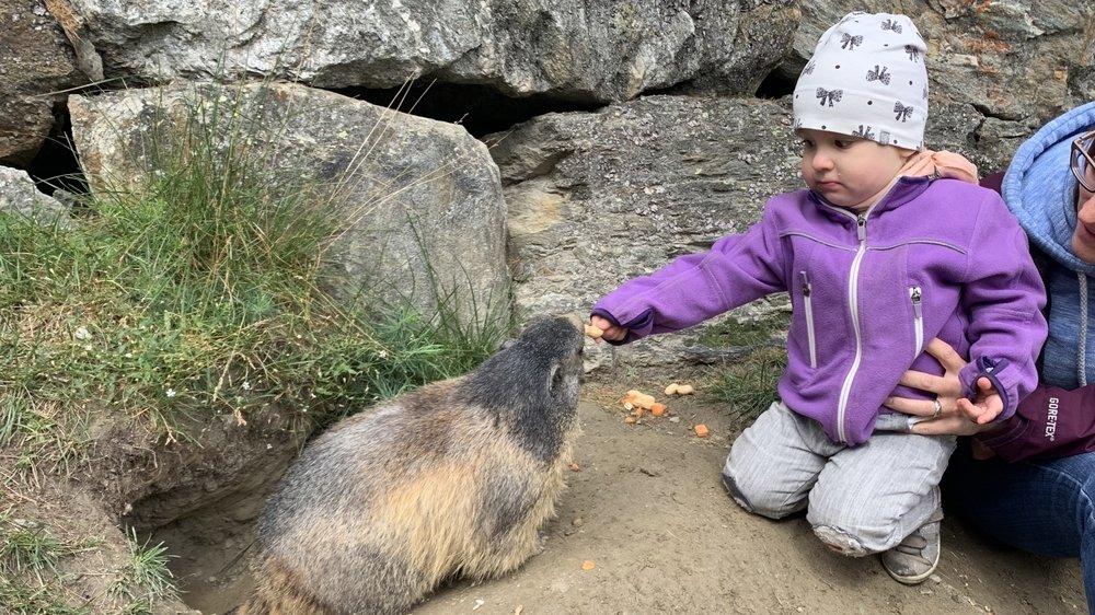 A Saas-Fee, la rencontre entre Mara et une marmotte est adorable.