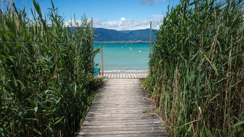 La plage de Gletterens, que l'on découvre après un long cheminement au milieu des roseaux.