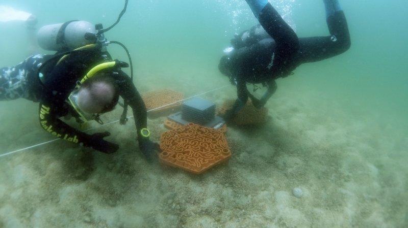 Les plongeurs placent les tuiles récifales dans la baie de Hong-Kong.
