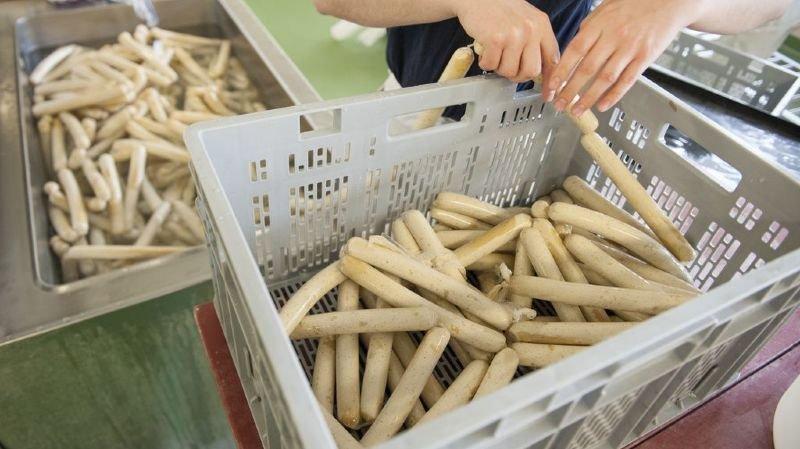 Agriculture: le soja importé en Suisse est toujours plus durable