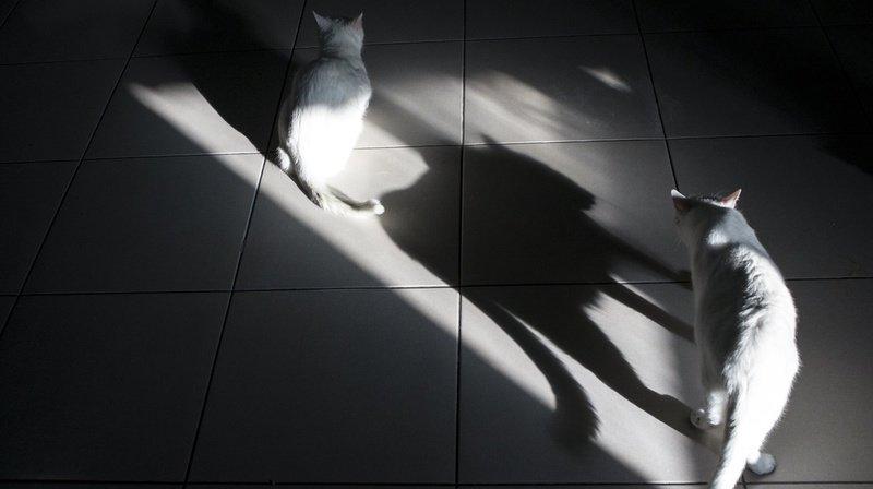 Une quarantaine d'autres chats vivants, mais malades, ont été découverts dans la maison (illustration).